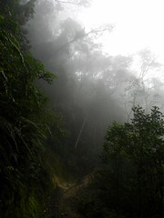 DSCN5966 (adamcmarshall) Tags: cloud mountain adam digital forest photography photo san montana image photos selva picture pic images hike marshall trail cerro photograph montaa sendero gerardo chirripo chirrip adammarshall chirip