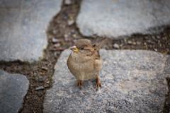 Birdy (tsdtsdtsd) Tags: cute animal topv111 canon zoo topv333 stuttgart wilhelma 6d