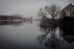 Spiegelung (Rubina V.) Tags: winter wasser natur bume reflexionen gewsser pritzerbe