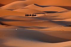 Sahara (Victoria.....a secas.) Tags: sahara desert explore desierto marruecos camels dunas camellos