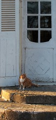 Reflections in a door (stanzebla) Tags: cats reflection chats reflexion katzen