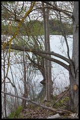 """Entre Hiver et printemps sur les berges du lac de Passeligne -2 (Brigitte ... """"Tatie Clic"""") Tags: lake water eau hiver lakes lac berge reflet lacs reflets berges rivage rive agen gascogne leau aquitaine rives lotetgaronne parcdeloisirs auborddeleau bo arbrenu plissier francesudouest passeligne hiverpasseligne 2014032830 parcnaturelagengaronne"""