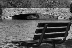 I Dream Of Summer Days (jah32) Tags: park bridge blackandwhite bw ontario canada water blackwhite victoriapark nikon parks bridges monochromatic parkbench stratford whiteandblack d80