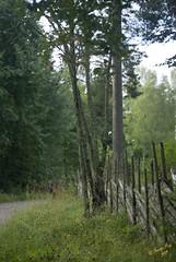 svgen i Furuborg, grsgrd #1 (George The Photographer) Tags: se sweden skog dis hus trd vg nykvarn grs staket boende grsgrd sdermanland samhlle grenar grusvg trdstam sensommar lvtrd grdesgrd omrde trdstammar furuborg disigt igenvxt smvgar grusvaeg tomtgrns