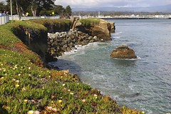 Santa Cruz in Spring (takenbygabi) Tags: ocean california santa ca flowers blue sea plant ice beach water lines rock cali bay coast flora rocks waves horizon north salt s coastal cruz iceplant area boardwalk coastline normal curve northern