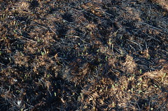 "Burned Ground <a style=""margin-left:10px; font-size:0.8em;"" href=""http://www.flickr.com/photos/91915217@N00/13920086012/"" target=""_blank"">@flickr</a>"
