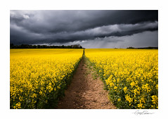 Rapeseed Storm (George-Edwards) Tags: uk light shadow england sky cloud sun plant storm field rain yellow rural landscape countryside spring nikon exposure track outdoor path farm scenic crop land daytime lightning canola rapeseed oilseedrape bucklebury westberkshire georgeedwards