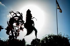 Part of your world (EverythingDisney) Tags: sun eclipse princess disneyland disney parade mermaid dlr thelittlemermaid princessariel partofyourworld soundsational mickeyssoundsationalparade soundsationalparade