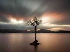 Millarochy Tree (MarkHarrisPhotography) Tags: tree water longexposure le seascape landscape lochlomond millarochy scotland sunset sky clouds