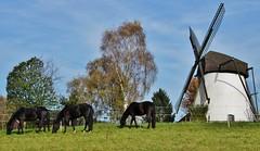 Reken, Westmünsterland, Windmühle (friedhelmbick) Tags: windmühle reken westmünsterland