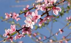 Just look around (kud4ipad) Tags: 2015 киев ботаническийсад весна цветы kiev botanic garden spring flower blossom sky rose scarlet outdoors bokeh