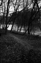 (|Digital|Denial|) Tags: kodakdoublex cinemafilm 35mm analog diy minolta x700 autumn blackandwhite riverbank winnipeg river autmn leaves trees