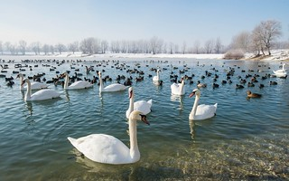 lake Zajarki (096)