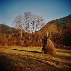 Zlatibor Haystack (sonofwalrus) Tags: holga film lomo lomography scan serbia europe zlatibor field trees haystack