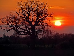 Tree & Sunset (Rob Felton) Tags: light sunset sky cloud sun tree silhouette set skyline skyscape bedford bedfordshire felton lumen cardington robertfelton