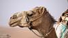 DSC00841 (Instagram x3abr twitter x3abrr) Tags: نار سيارة حيوانات السعودية حطب نيسان صحراء رمل شجر عدسة قرية ثعبان باترول سوني جيب القصيم سحلية كامرة زوم ثعابين الرربيعية الفا٥٧ alrrabieihpuebloqassim arabiasauditaserpienteárbolesdemaderadefuegodelaarenapatrullajeepnissankamrhsonyalpha57animalesserpienteszoomlagartolentedesierto