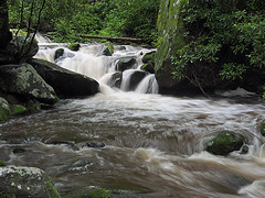 IMGPG15635 - Great Smoky Mountains National Park - Roaring Fork (David L. Black) Tags: nationalparks greatsmokymountainsnationalpark