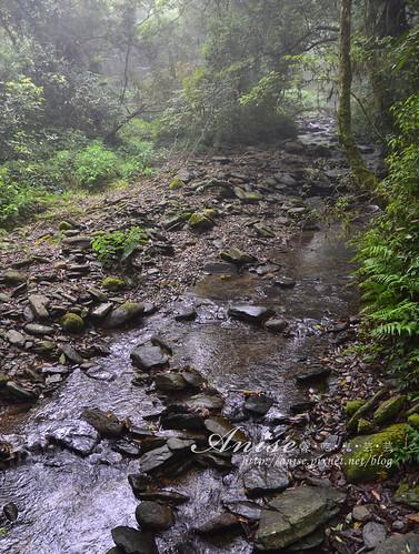 福山植物園_038.jpg