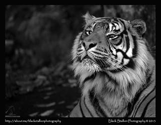 Auckland Zoo 07