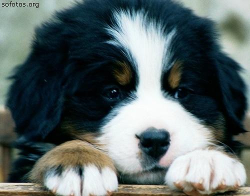 Filhotes de cachorros 42