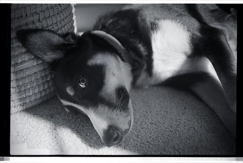 Dog kip