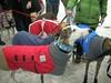 HornPond01-30-2011042