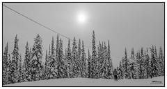The return-Part 2 (mrtonmoy) Tags: morning winter ski bigwhite wintermorning returninghome skiunderthesun
