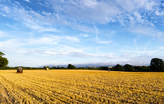 Walking the dog (Neil_Leighton) Tags: blue trees summer woman dog tractor tree green yellow clouds woodland landscape sussex evening countryside westsussex wheat bluesky machinery fields leisure crops agriculture cloudscape burgesshill longshadows hurstpierpoint sussexcountryside