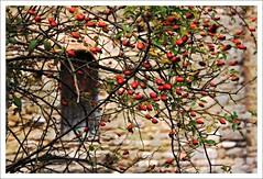 Tardor a Sant Pere de Graudescales (Pemisera) Tags: church roman iglesia catalonia catalunya romanesque église cataluña catalogna románico katalonien catalogne romànic solsonès església valldora santperedegraudescales navès pemisera