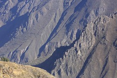 Zig-Zag Path  Steep Majestic Walls of the Colca Canyon Landscape Peru South America (eriagn) Tags: world travel winter mountains male bird peru southamerica nature del landscape photography volcano wings wildlife feathers tourist naturalhistory cruz huge hart geology predator heavy juvenile arequipa wingspan zigzag extinct soar colcacanyon chivay scavenger ecosystem thermals talons plumage andeancondor cruzdelcondor vulturgryphus newworldvulture canyonwalls zigzagpath ampato nearthreatenedspecies colcariver eriagn ngairelawson ngairehart lawsonngaire vulturgryhus condornear wallsnew