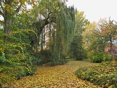 Wismar (Weidendamm) - Autumn in the park (.patrick.) Tags: park autumn fall leaves yellow herbst gelb wismar bltter mecklenburgvorpommern mecklenburgwesternpomerania grnanlage weidendamm parkdersolidaritt wismarwest