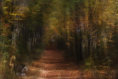 DSC_0704 (AC Fisher) Tags: longexposure autumn trees sunlight lightpainting abstract fall lights surreal cameratoss lightplay intentionalcameramovement