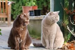 Meine Ktzchen Sam und Emma (August Gary) Tags: sam emma august gary katze karthuser