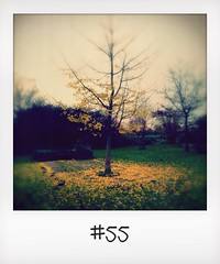 "#DailyPolaroid of 22-11-13 #55 • <a style=""font-size:0.8em;"" href=""http://www.flickr.com/photos/47939785@N05/11030663674/"" target=""_blank"">View on Flickr</a>"