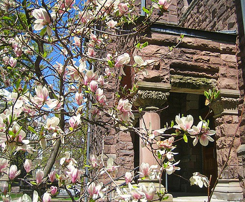 Cornell in spring: Abraham Lincoln Hall