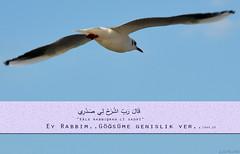 قَالَ رَبِّ اشْرَحْ لِي صَدْرِي (gLySuNfLoWeR) Tags: taha dua iman kalp kuran gönül islamiyet