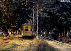 Towards Destiny...... (Anubhab's Photography) Tags: street trees india heritage nature public car electric asian photography photos indian transport pride best destiny friendly environment incredible bengal towards calcutta ctc maidan bengali dey heri anubhab theheritageandprideofcalcuttaorkolkata thetramways