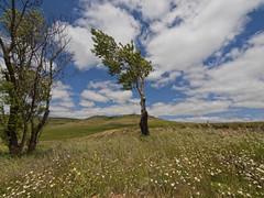 Caprichos de la naturaleza (Marin2009) Tags: