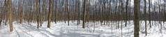 Bois de Liesse (anng48) Tags: winter canada quebec montreal hiver qc parcnatureboisdeliesse montrealareaparks