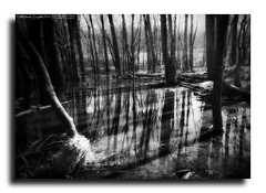 - Echoes of Serenity - (StormLoverSwin93 | Into the Storm) Tags: trees light blackandwhite bw sunlight black nature water beautiful canon reflections landscape illinois amazing surreal calm serenity dreamy serene 60d canon60d canoneos60d vision:outdoor=0806