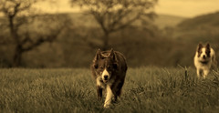 sister & brother (A child in the night) Tags: sister brother luke kira bordercollie mayyounever