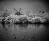 Ducks and Wind Mill (MStoeckle) Tags: blackandwhite bw mill birds animals pen ir wind farm olympus rhodeisland infrared legacy prescott 25mm adaptedlens epl2