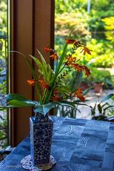 Tea room (Yorkey&Rin) Tags: summer flower japan olympus 夏 tearoom kanagawa rin fujisawa 2015 em5 7月 lumixg20f17 江ノ電沿線 pc236645