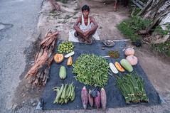 Assam_012 (SaurabhChatterjee) Tags: assam countryside guwahati httpsiaphotographyin india lakhimpur rural saurabhchatterjee siaphotography tea teagardens tezpur village