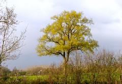 """La campagne vendéenne au printemps """"France"""" (josianelavielle) Tags: campagne arbre"""
