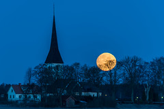Moon down (jarnasen) Tags: d810 nikon tamronsp150600mm 150600mm telezoom tripod moon morning dawn kaga church kyrka trees building profile perspective outdoor geo geotag copyright järnåsen jarnasen landscape landskap linköping östergötland sweden sverige scandinavia yellow