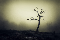 Arbol misterioso (Mimadeo) Tags: creepy tree grungy lonely bare scary silhouette dark background dead winter spooky mystery night landscape light fog horror mist halloween leafless dry trunk evil haunted alone single foggy gloomy fear moody branches mysterious death misty ominous grunge branch