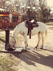 Self service  #nature #animal #horse #fountain #thirsty #water #citypark #shadows #streetphotography #colours #Turin (giuseppe_calvetti) Tags: thirsty animal nature turin colours horse shadows citypark fountain streetphotography water