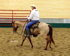 Cutting Horse Show in Minnesota (RileyRants) Tags: horses horse man cowboy cattle western cutting