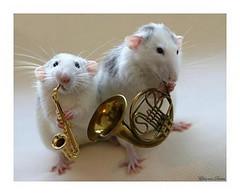 Cute duet (Dona Mincia) Tags: music pet cute art animal mouse duet humor mice hamster instruments msica fofo rato msico instrumento gracinha dueto ratinho